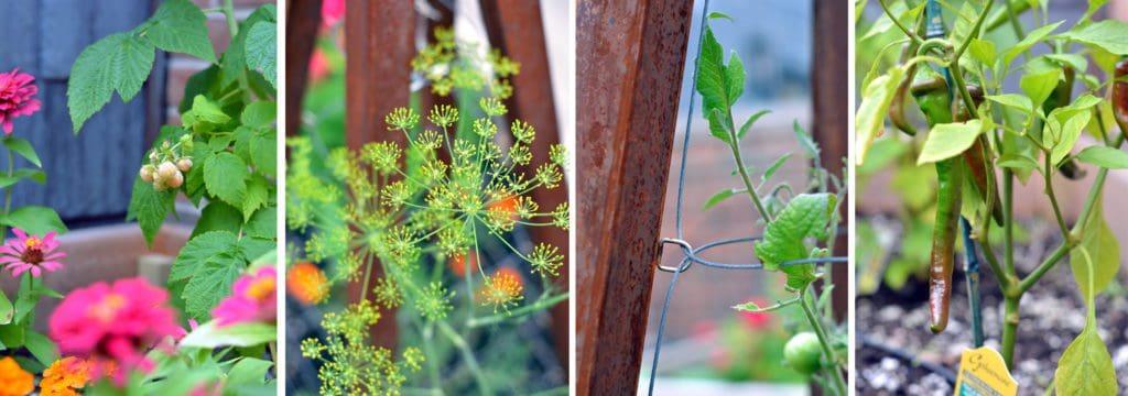 Topiarius Gardening