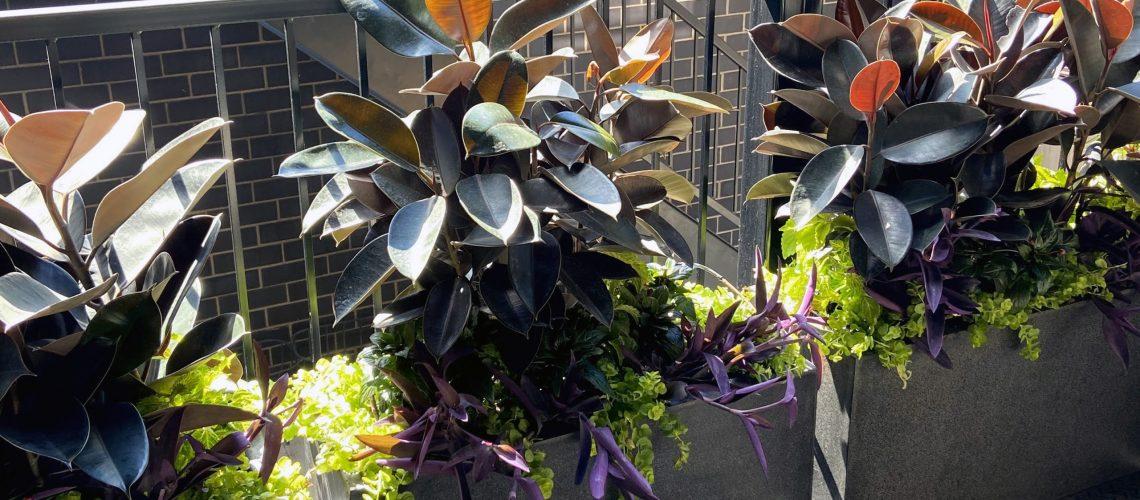 Summer Annuals Free Planting Plan